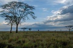 Afrykanów krajobrazy - Serengeti park narodowy Tanzania Zdjęcie Stock