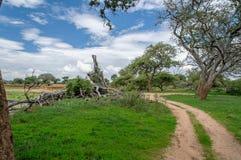 Afrykanów krajobrazy - Tarangire park narodowy Tanzania Zdjęcia Royalty Free