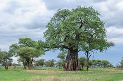 Afrykanów krajobrazy - Tarangire park narodowy Tanzania Obrazy Royalty Free
