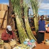 Afrykanie Fotografia Stock