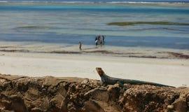 Afrykanin plaża przy Mombasa miastem w Kenja Obraz Stock