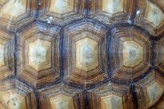 Afrykanin pobudzająca tortoise lub geochelone sulcata skorupa Zdjęcie Stock