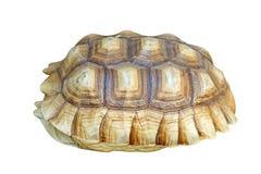 Afrykanin pobudzająca tortoise lub geochelone sulcata skorupa Zdjęcia Royalty Free