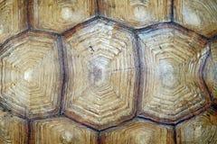 Afrykanin pobudzająca tortoise lub geochelone sulcata skorupa Obraz Royalty Free