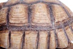 Afrykanin Pobudzający Tortoise na bielu Zdjęcia Stock
