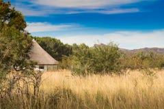 Afrykanin pokrywał strzechą budę w krzaka trawiastym terenie fotografia stock