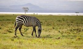afrykanin przeciw blondynki Kenya jeziora krajobrazu Naivasha park narodowy safari sunglass kobiety potomstwom Zdjęcia Stock