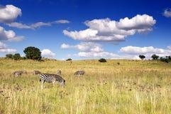 afrykanin przeciw chmurnego nieba zebrie Obrazy Royalty Free