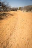 Afrykanin pustyni ślada Obrazy Stock
