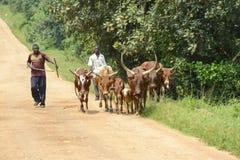 Afrykanin rogate krowy z poganiaczami bydła Zdjęcia Royalty Free