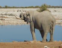 Afrykanin Waterhole Obrazy Royalty Free