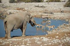 Afrykanin Waterhole Fotografia Royalty Free