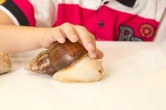 Afrykanina Achatina ślimaczek w ręce w domu, zamyka up Obraz Stock