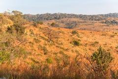 Afrykanina Bush koloru roślinność Obrazy Royalty Free
