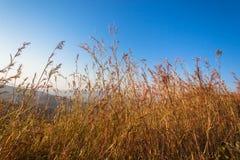 Afrykanina Bush trawy kolor Fotografia Stock