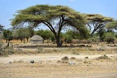 afrykanina dom Obraz Royalty Free
