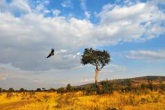 afrykanina krajobraz Zdjęcia Stock