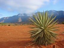 afrykanina krajobraz Obraz Stock