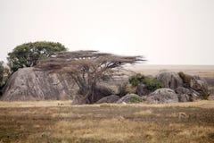 Afrykanina krajobraz Fotografia Stock