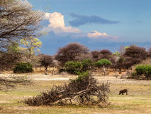 Afrykanina krajobraz Obraz Royalty Free