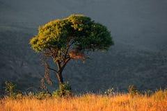 Afrykanina krajobraz Fotografia Royalty Free