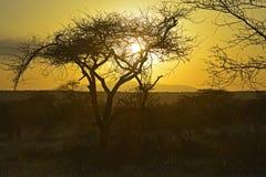 Afrykanina krajobraz Zdjęcie Royalty Free