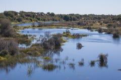 Afrykanina krajobraz: Delt Rzeczni Goniący przelotowi drzewa Zdjęcie Royalty Free