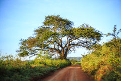 Afrykanina krajobraz - droga gruntowa przez sawanny, Kenja Zdjęcia Royalty Free
