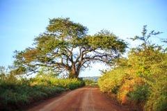 Afrykanina krajobraz - droga gruntowa przez sawanny, Kenja Fotografia Royalty Free