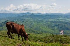 Afrykanina krajobraz. Etiopia Fotografia Royalty Free