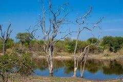 afrykanina krajobraz i rzeka w UAR, Kruger park Obraz Royalty Free