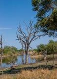 Afrykanina krajobraz i rzeka w UAR, Kruger park Obraz Stock