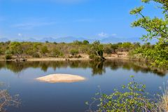 Afrykanina krajobraz i rzeka w UAR, Kruger park Fotografia Stock
