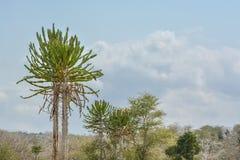 Afrykanina krajobraz, kaktus i roślinność, Obrazy Stock