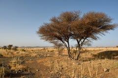 Afrykanina krajobraz, Maroko Fotografia Stock