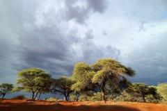 Afrykanina krajobraz przeciw burzowemu niebu Zdjęcia Stock