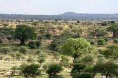 Afrykanina krajobraz - Tarangire park narodowy. Tanzania, Afryka Obrazy Stock