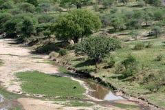 Afrykanina krajobraz - Tarangire park narodowy. Tanzania, Afryka Fotografia Royalty Free