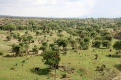 Afrykanina krajobraz - Tarangire park narodowy. Tanzania, Afryka Zdjęcie Stock