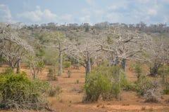 Afrykanina krajobraz w Angola, wielki widok Obrazy Stock