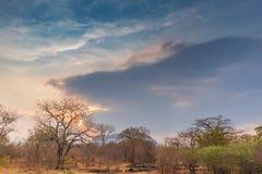 Afrykanina krajobraz w Lubango, Angola z drzewami i dramatycznym słońcem Obraz Royalty Free