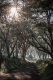 Afrykanina krajobraz w ranek mgle blisko jeziornego Nakuru Fotografia Stock