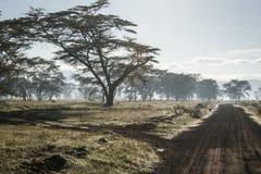 Afrykanina krajobraz w ranek mgle blisko jeziornego Nakuru Zdjęcie Royalty Free