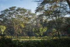 Afrykanina krajobraz w ranek mgle blisko jeziornego Nakuru Obrazy Royalty Free