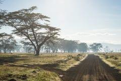 Afrykanina krajobraz w ranek mgle blisko jeziornego Nakuru Zdjęcia Royalty Free