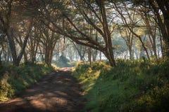 Afrykanina krajobraz w ranek mgle blisko jeziornego Nakuru Obrazy Stock