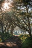 Afrykanina krajobraz w ranek mgle blisko jeziornego Nakuru Fotografia Royalty Free