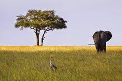 Afrykanina krajobraz w Serengeti parku narodowym Zdjęcie Stock