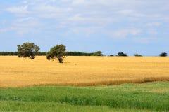 Afrykanina krajobraz z banatką Zdjęcie Stock