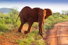 Afrykanina krajobraz z czerwonymi słoniami Obraz Stock